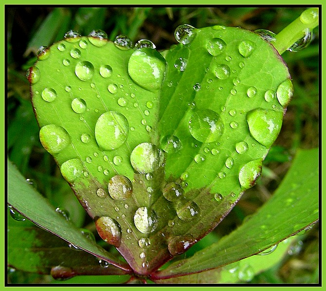 Drops in the heart